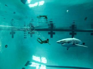 sharkpool#